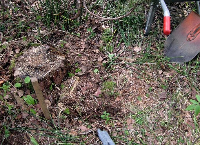 IMG_5935 Harusankkuri kannon alla on maisemoitu laittamalla turpeet kuopan peitteeksi (c) OH7HJ.JPG